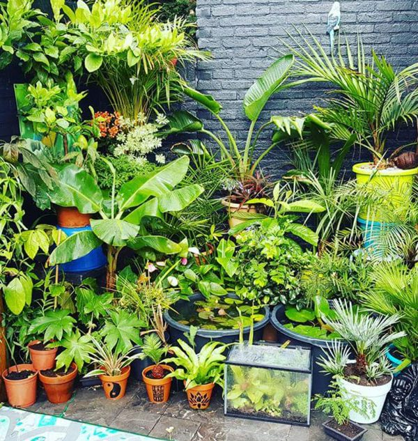 Plant lover: 10 reasons why I love plants so much - more of Jermain's impressive tropical plant collection
