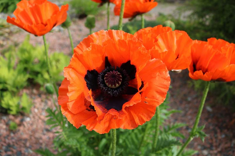 Gardening Jobs For July Michael Perry Mr Plant Geek