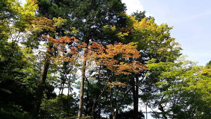 10 Everyday Japanese Plants Michael Perry Mr Plant Geek