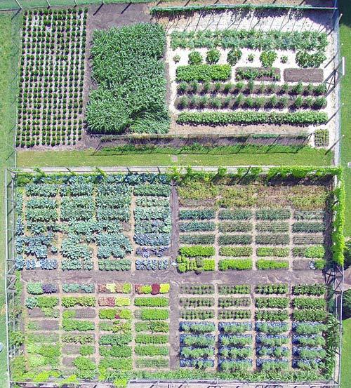 Plant Geeking Out With Martha Stewart S Head Gardener Ryan