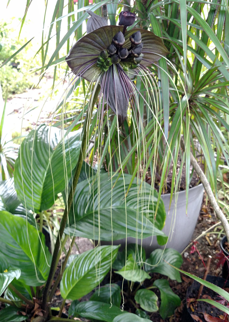 10 Unusual Houseplants To Grow This Year Mr Plant Geek