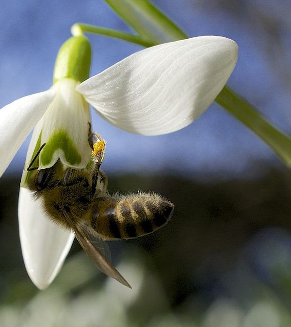 Helping Bees in Winter