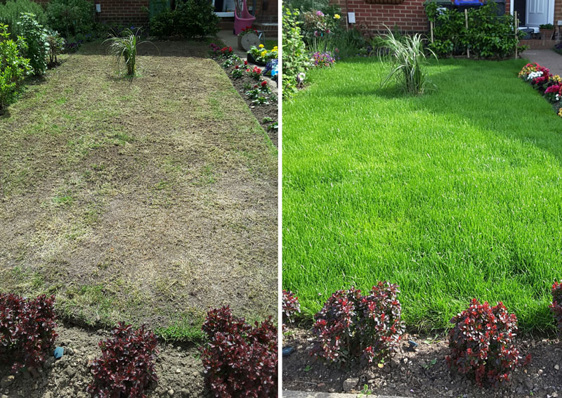 Lawn Care: How to Get the Best From Your Lawn | Mr Plant Geek