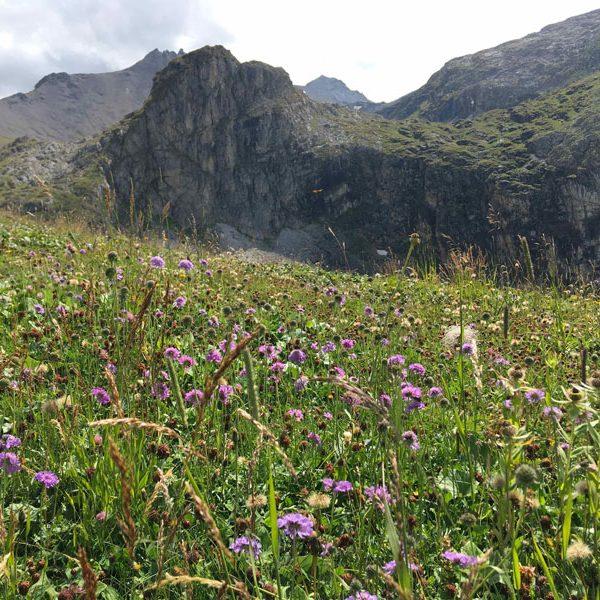 Wildflowers and wildlife thrive