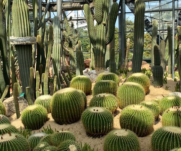 South China Botanic Garden feature image