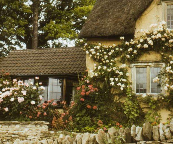 Cottagecore - feature image