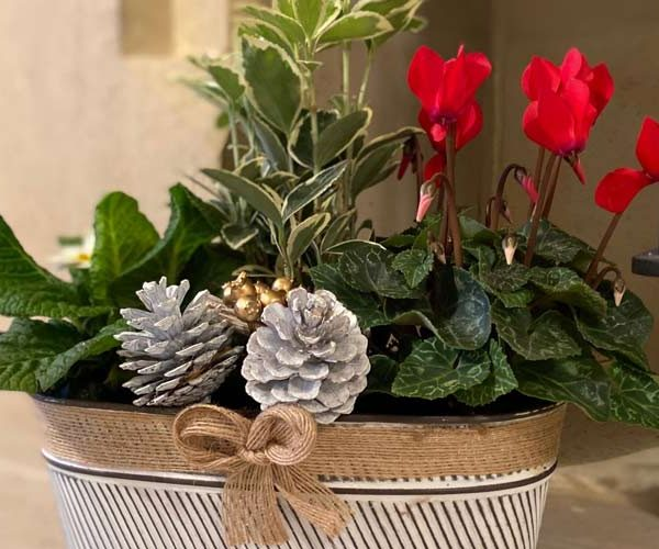 Christmas plant centrepiece - feature image