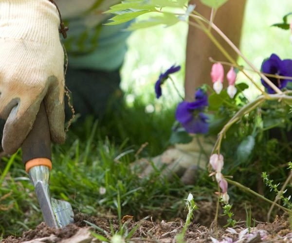 Gardening Hacks - feature image