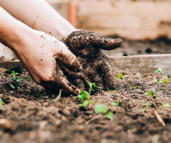 Gardening personality quiz