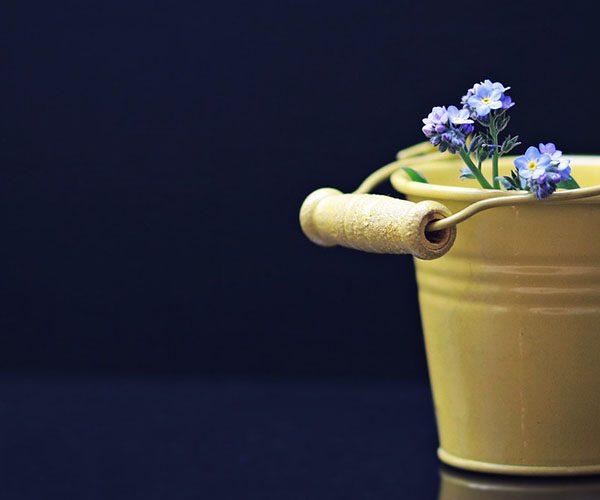Plant bucket list